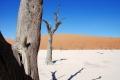 AGOSTINUCCI_ROBERTO_4_Deserto