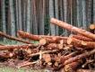 Somma_Luisa_5_alberi caduti
