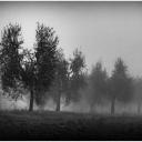 13 - L'Angelo nella nebbia