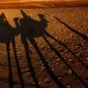 116 - Ombre nel deserto