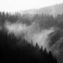 35 - La surreale foresta di Re Laurino