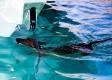 18 - Refreshing Swim