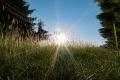20 - Fili d'erba e di sole