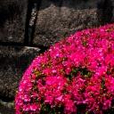 33 - Il fiore e la pietra