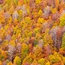 52 - Morbido autunno