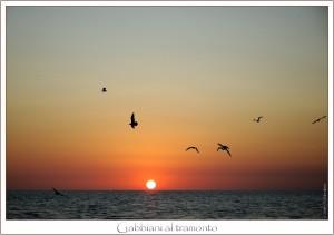 Gabbiani al tramonto