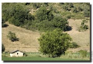 La piccola casa e la grande quercia