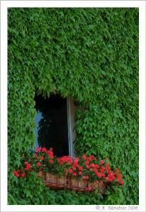 La finestra fiorita