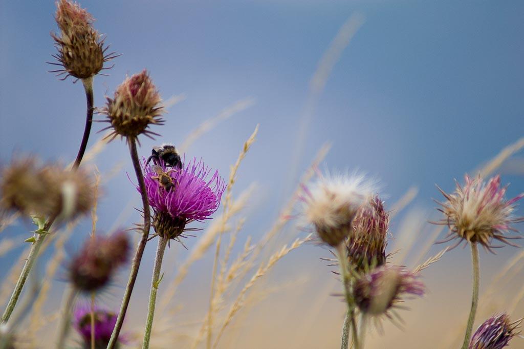 vita tra i fiori