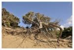Tra le dune di Sabaudia 3 (foto Tari)
