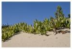 Tra le dune di Sabaudia 2 (foto Tari)