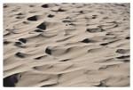 Tra le dune di Sabaudia 1 (foto Tari)