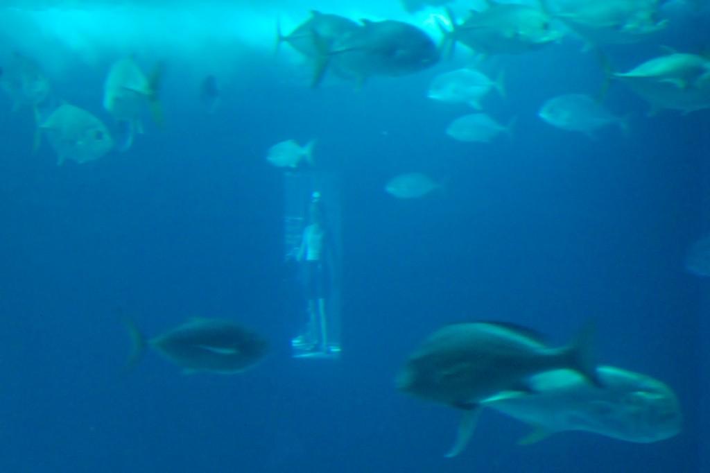 Foto 09 acquario DSC_0223-bis web