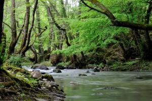 Nell'intimo della natura riscopriamo il nostro io più profondo.