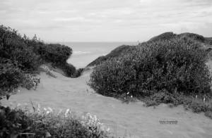 Le dune di Capocotta.