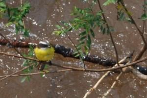 12--Iguazu DSC_0963-Bw