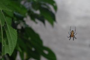 14--Iguazu DSC_0026w