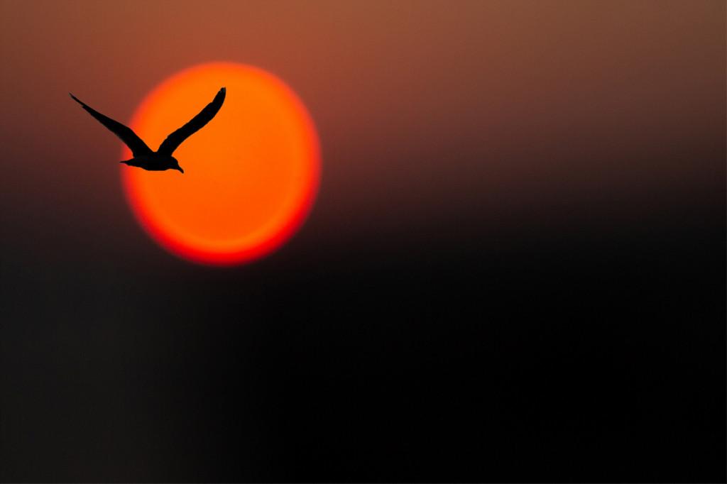 antonio-tomasso-contrasto-di-immagine