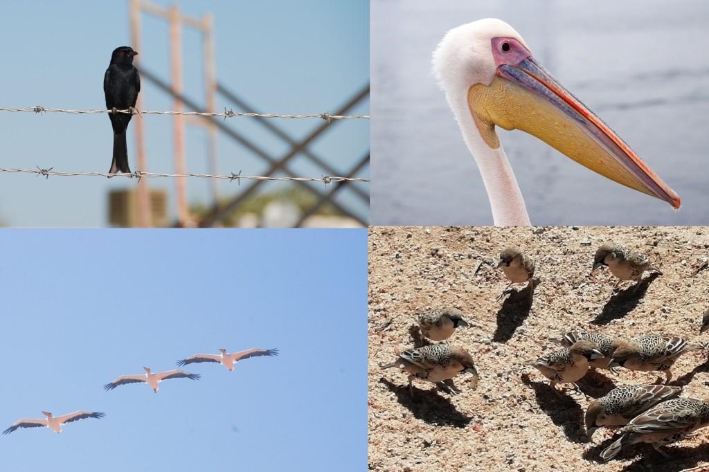10-uccelli-1