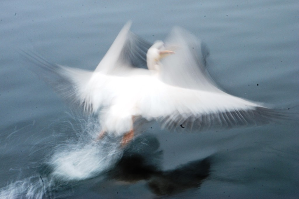11-uccello-2