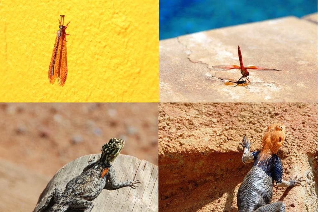 13-insetti-lucertole
