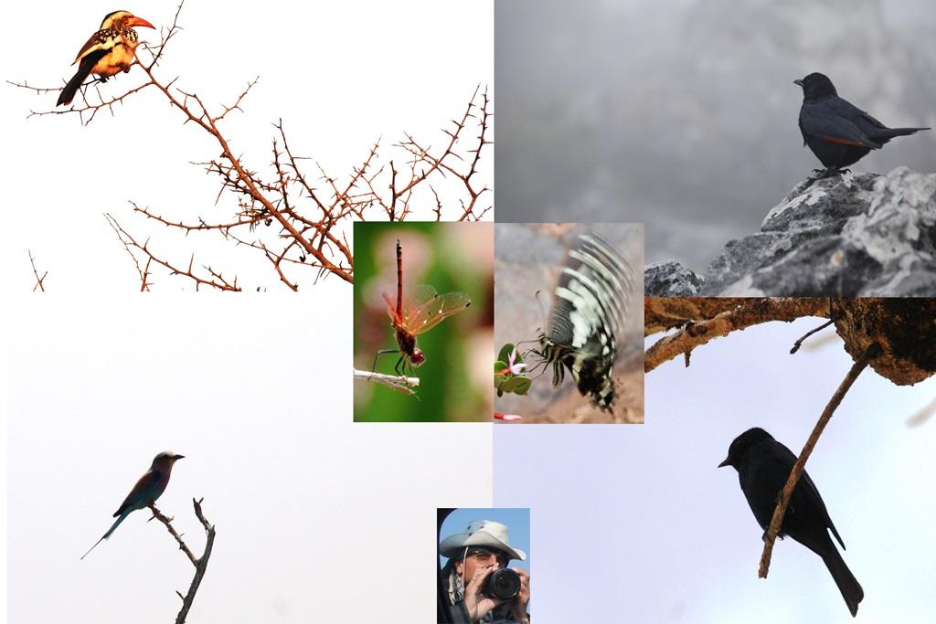02-uccelli_w