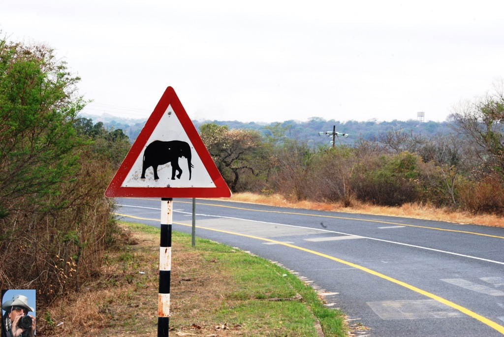 09-elefante-1_w