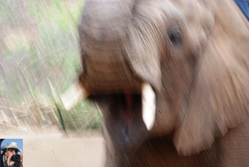 10-elefante-2_w