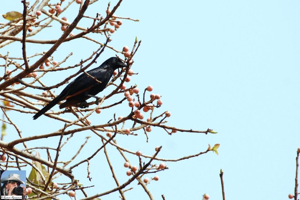 14-uccello-1_w