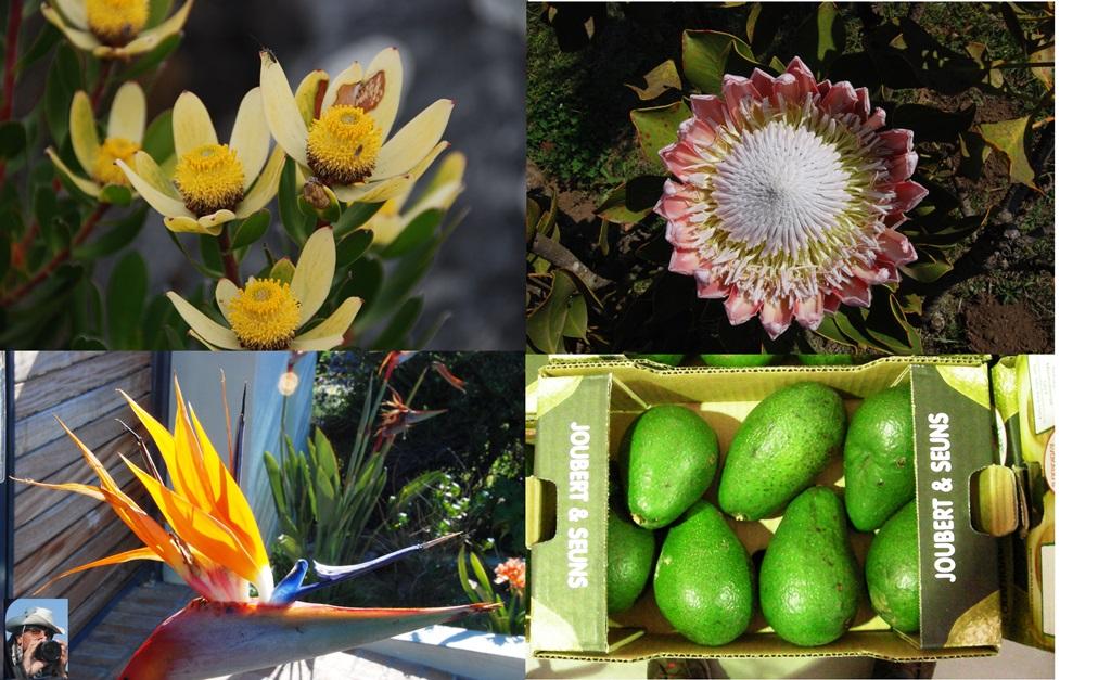15-fiori-e-frutti_w