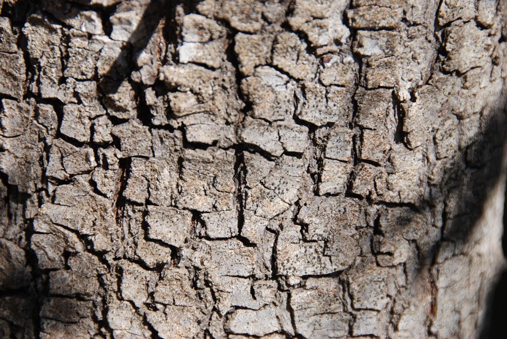 21_albero
