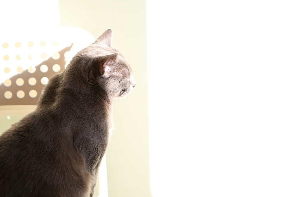 40-cat-in-the-light