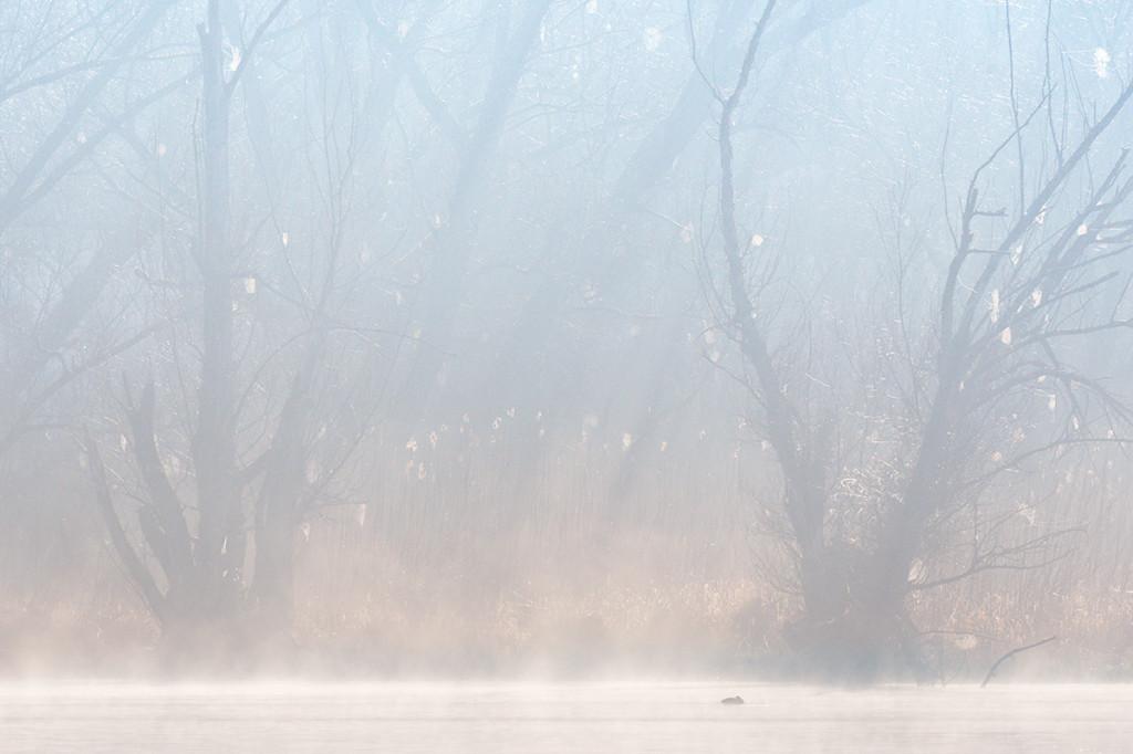 45-nebbia-mattutina