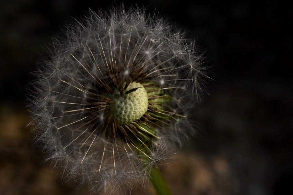 43-pollini
